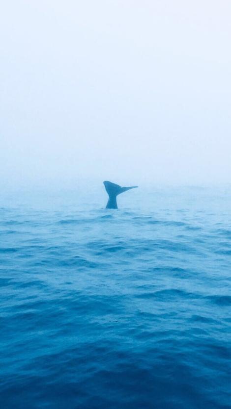 Aus Beitrag: Die tierische Südinsel
